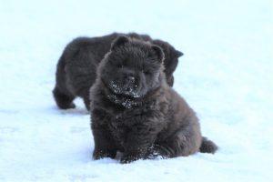 Talvi_pentu